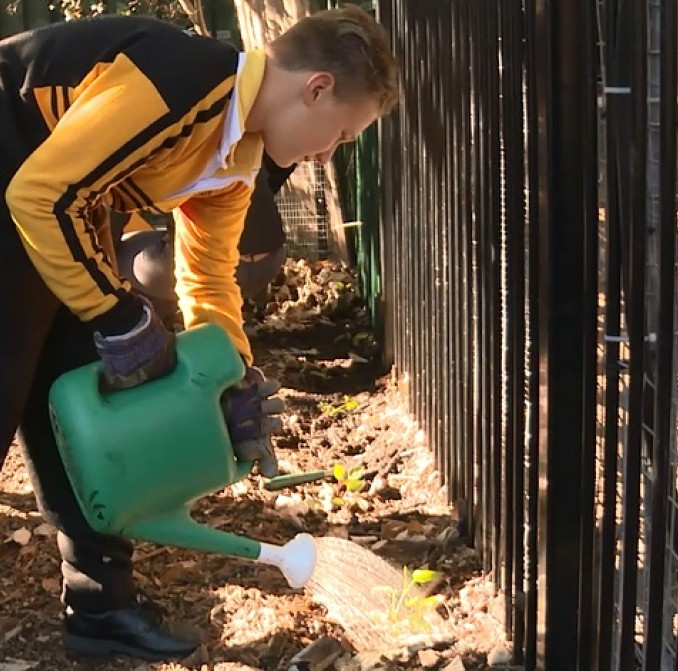 Students help to plant trees at School Tree Day